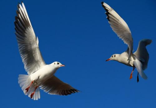 Fight on flight