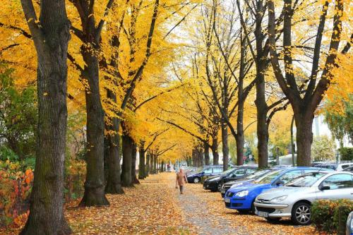 Musim gugur, Frankfurt am Main